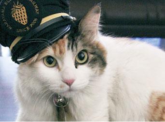 見捨てられずに拾った猫を飼っているが、気になっていた先輩社員を家に迎えたら