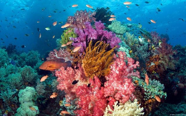 形見に貰った珊瑚の指輪
