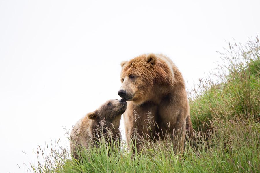 大学の授業で私の疑問「どうして凶暴で事件を起こす熊は メスばっかりなのか」先生「メスの熊ばっかりってどういうこと?」